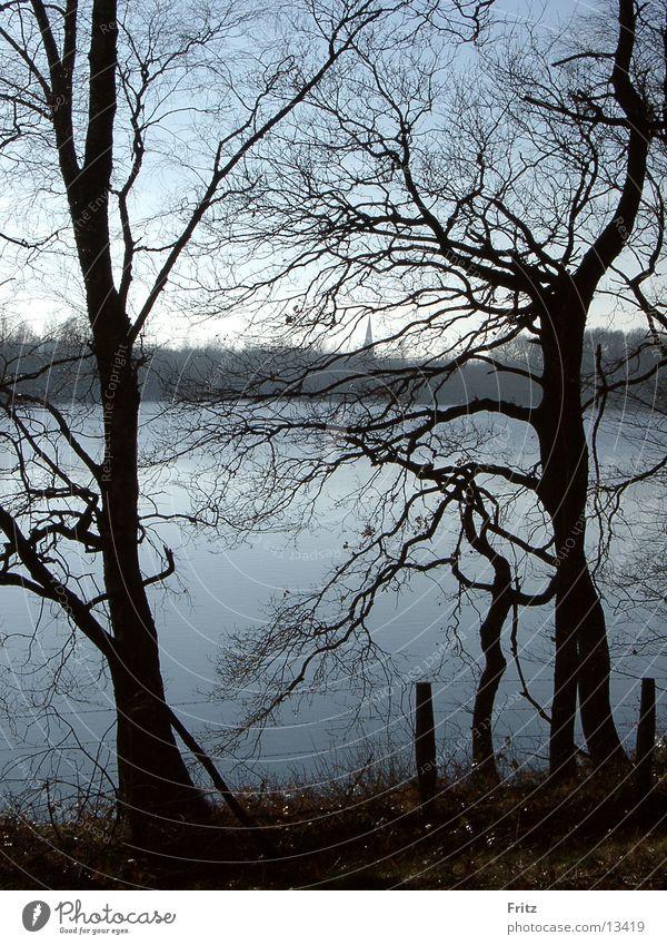 Water Tree Autumn Lake