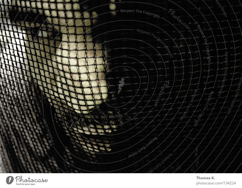Fear Nose Net Catch Captured Panic Amazed Confine