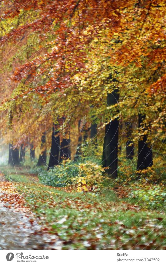 Nature Green Beautiful Tree Landscape Leaf Forest Yellow Autumn Lanes & trails Orange Idyll Footpath Autumn leaves Autumnal October