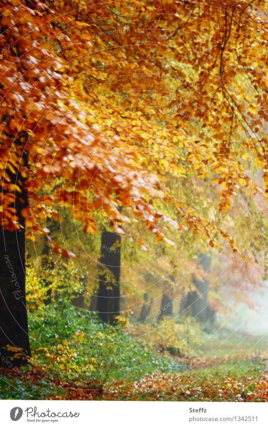 atmospheric fog in autumn forest autumn fog Automn wood forest bath Cloud forest Misty atmosphere Autumnal landscape golden autumn romantic foggy