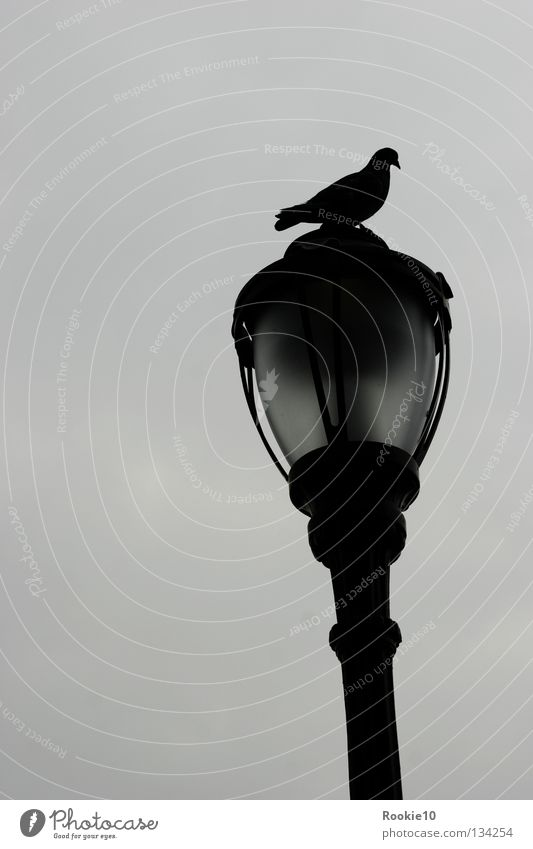 """"""" My dark place """" Bird Pigeon Lantern Animal Places Dark Grief Exterior shot Gloomy Loneliness Guard Fill Possessions Society Together Lamp Stagnating Calm Stay"""