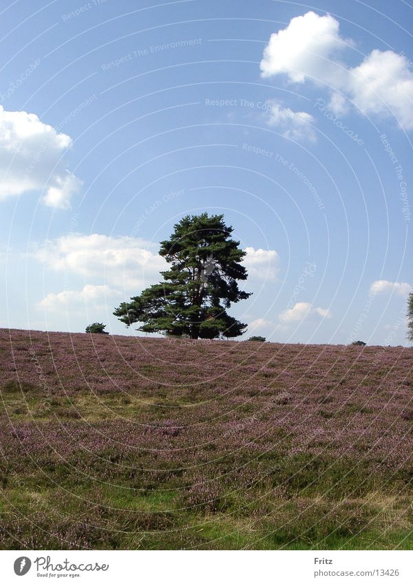 Tree Autumn Heathland Mountain heather