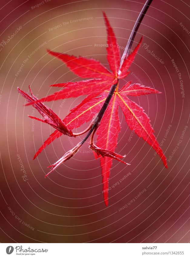 Nature Plant Colour Tree Relaxation Red Leaf Autumn Happy Moody Park Growth Illuminate Esthetic Change Hope