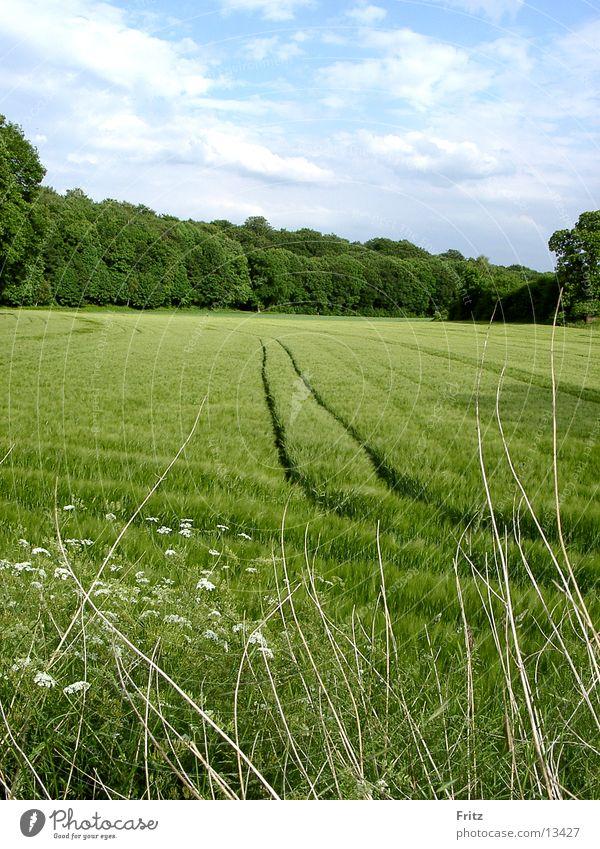 field-in-the-spring Spring Field Green Tracks