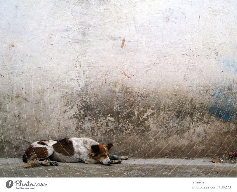 Old White Blue Summer Animal Relaxation Dog Dirty Sleep Break Lie Trash Derelict Fatigue India Mammal