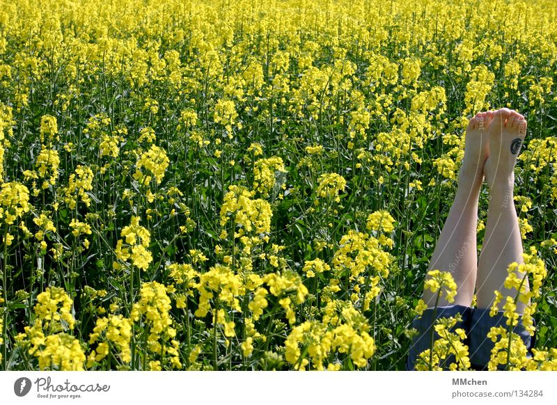 Nature Green Plant Vacation & Travel Nutrition Yellow Relaxation Blossom Spring Feet Landscape Legs Field Food Trip Energy industry