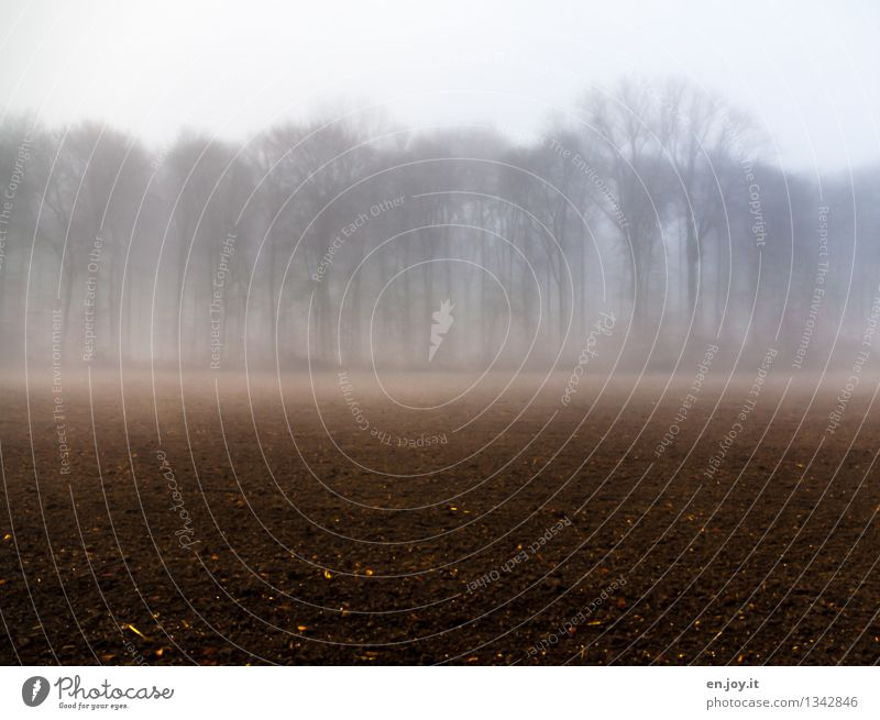 Nature Plant Relaxation Landscape Calm Winter Dark Forest Environment Sadness Autumn Brown Dream Field Fog Growth