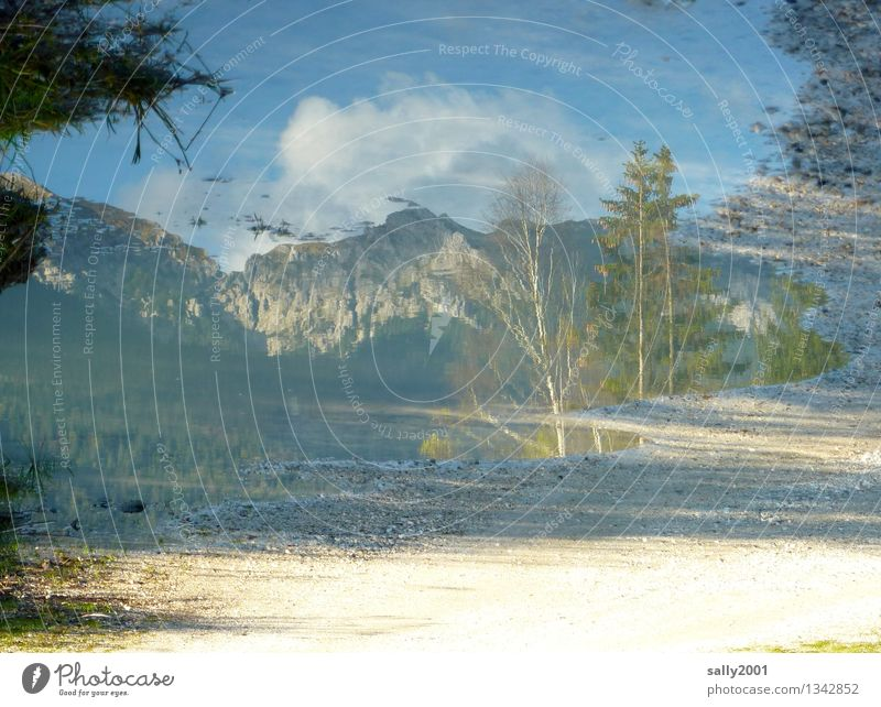 Karwendel in the mirror... Nature Earth Autumn Beautiful weather Tree Rock Mountain Alps Hiking Fantastic Natural Bizarre Loneliness Idyll Stagnating Puddle