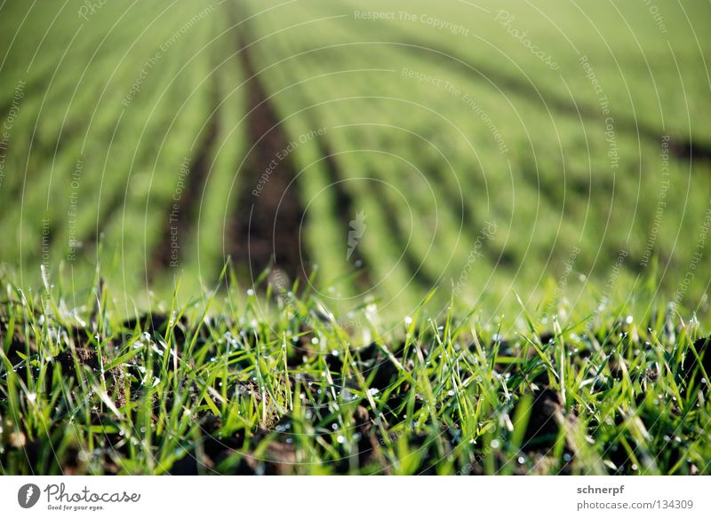 Nature Green Beautiful Meadow Grass Spring Sand Brown Rain Field Earth Food Growth Wet Fresh Rope