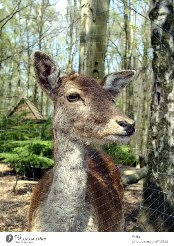 Nature Animal Forest Roe deer