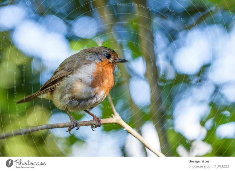 The early bird ... Family & Relations Environment Nature Spring Summer Beautiful weather Tree Park Forest Bird Songbirds Robin redbreast 1 Animal Small Cute