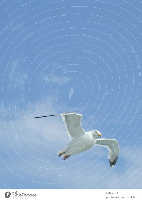 seagull Bird White Ocean Beach Clouds Coast Sky Blue Flying Aviation