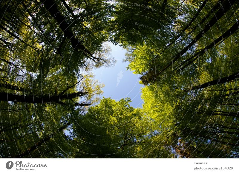 Sky Green Sun Tree Forest Street Spring Round Hollow Rotate Rotation Fisheye Shaft of light Clearing Commute Pentecost