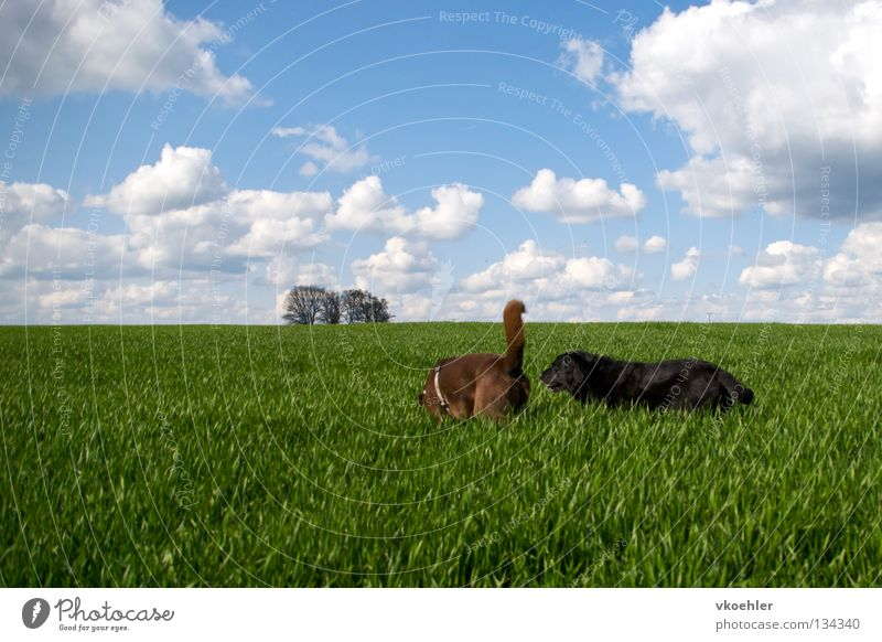 Vacation & Travel Animal Far-off places Grass Freedom Dog Friendship Hiking Horizon Peace Mammal