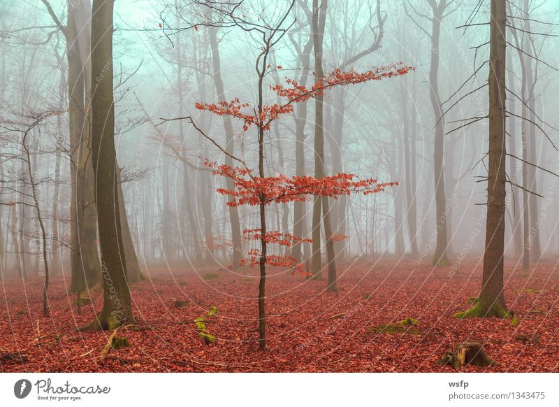 Tree Red Leaf Forest Spring Autumn Dream Fog Turquoise Surrealism Magic Mystic Enchanting Fantasy literature Enchanted forest Enchanted wood