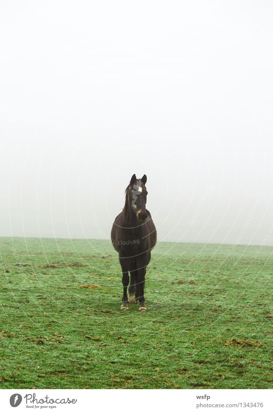 Horse in the fog on a meadow Animal Fog Meadow Farm animal Green Black Willow tree Ride look at Looking