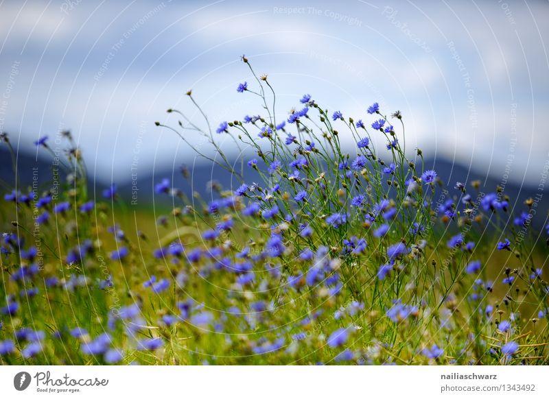 Nature Plant Blue Green Beautiful Summer Sun Flower Landscape Environment Grass Natural Field Growth Romance Hill