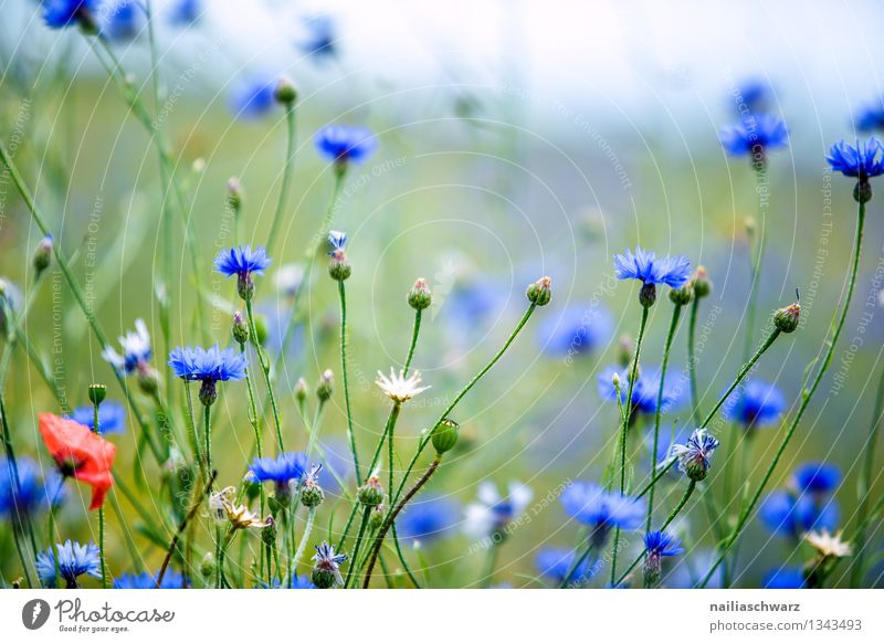 Nature Plant Blue Green Beautiful Summer Sun Flower Landscape Environment Meadow Natural Garden Field Growth Fresh