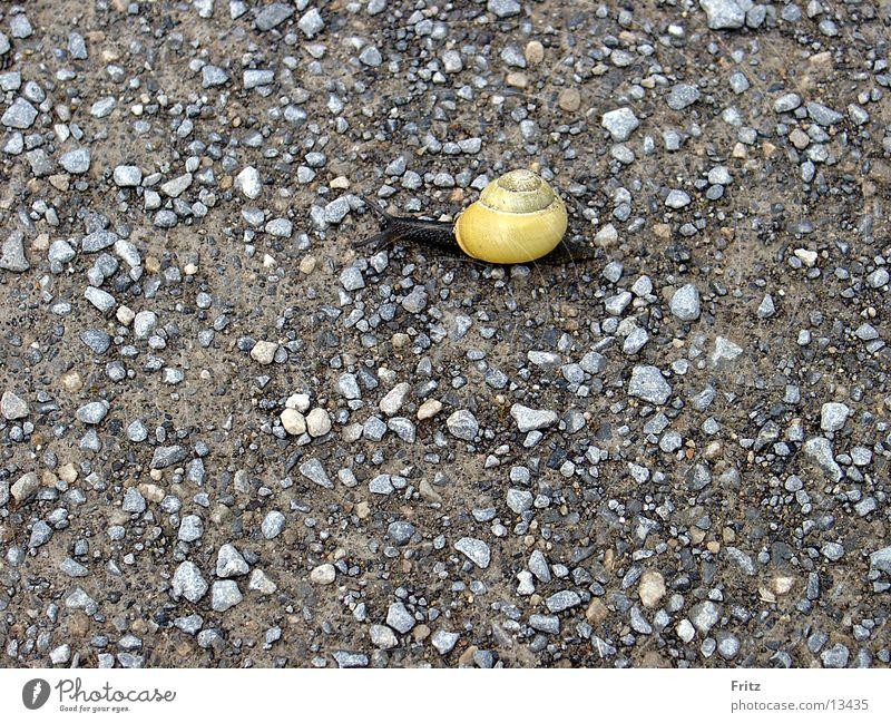 Lanes & trails Transport Snail Slowly Stony