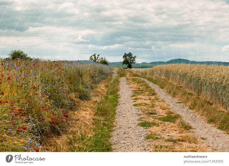 dirt road Summer Environment Nature Landscape Sky Plant Tree Flower Grass Grain field Field Hill Lanes & trails Growth Infinity Natural Beautiful Blue Yellow