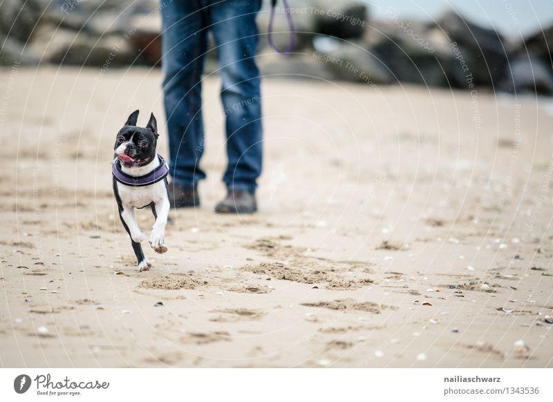 Dog Vacation & Travel Man Beautiful Ocean Joy Animal Beach Adults Lanes & trails Funny Coast Playing Happy Sand Friendship