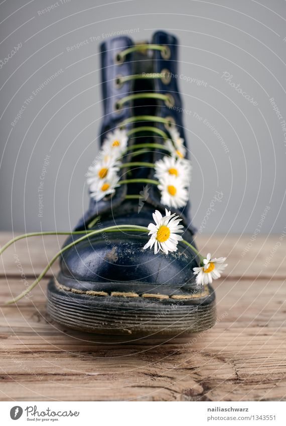 Boots with goose florets Flower Footwear Original Beautiful Blue Yellow Black lady's boots Heavy Daisy straps laced Converse Shoelace Colour photo Interior shot