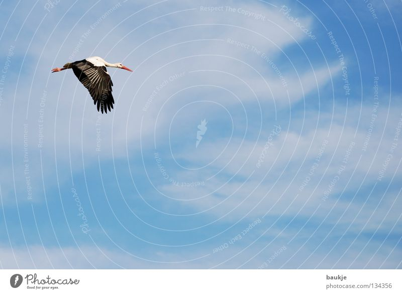 Beautiful Sky White Blue Calm Clouds Above Freedom Air Bird Birthday Flying Tall Aviation Wing Infinity