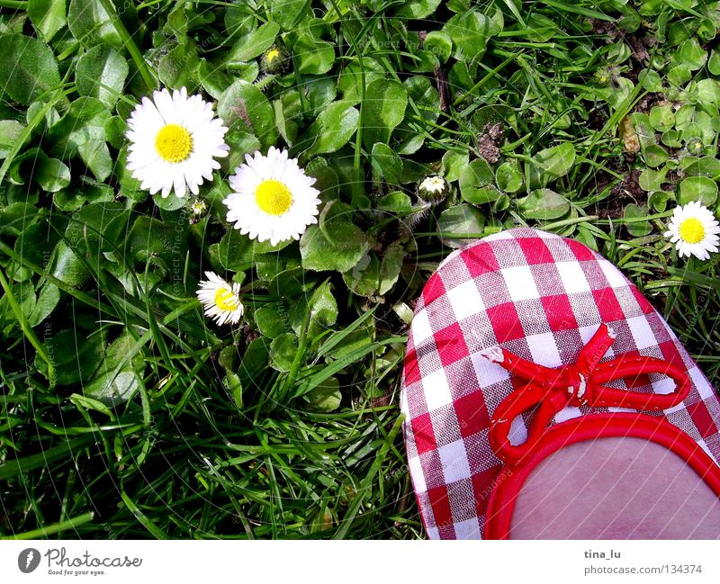 spring shoe II Spring Fresh Meadow Grass Green Daisy Grass green Flower Footwear Red Checkered Summer Summery White Toes Barefoot Blade of grass Dandelion