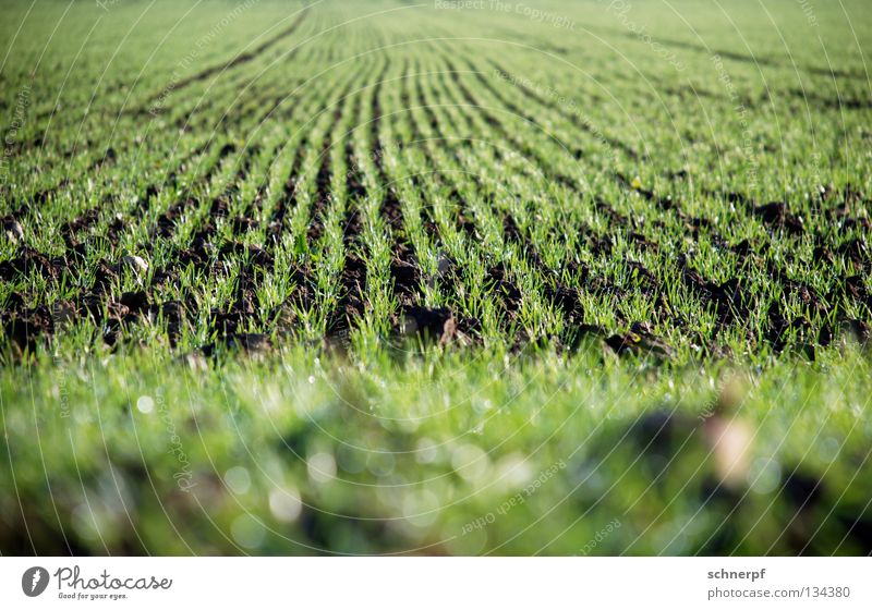 Nature Green Beautiful Meadow Grass Spring Brown Rain Field Earth Food Growth Wet Fresh Nutrition Rope