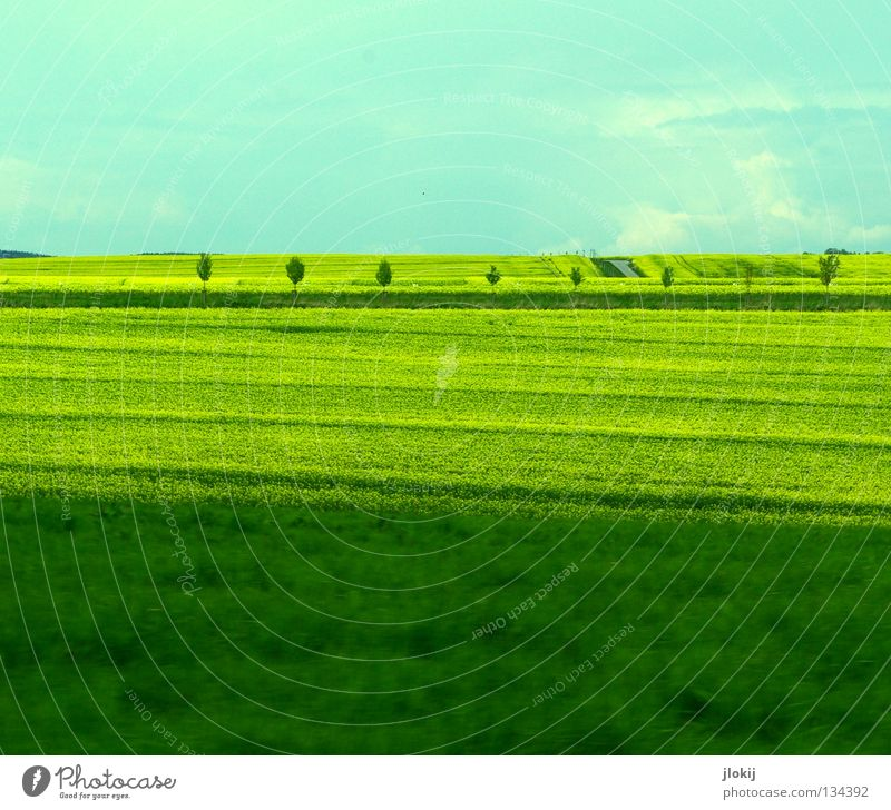 Sky Tree Green Plant Clouds Yellow Street Meadow Blossom Grass Field Planning Lawn Stripe Blossoming Agriculture