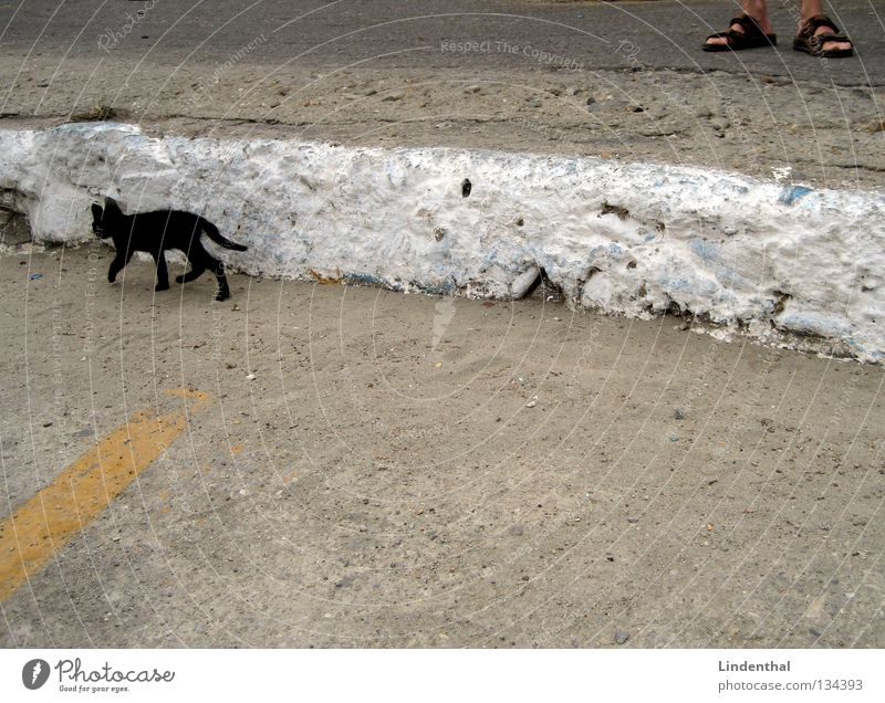 Man Black Feet Cat Footwear Small Going Walking Running Stand Thin Mammal Sandal Animal Domestic cat Kitten