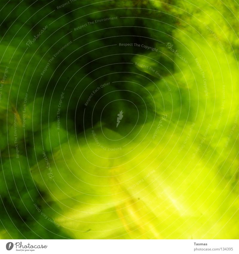 Green Colour Tree Leaf Forest Dye Movement Spring Bright Speed Trip Intoxicant Neon light Flashy