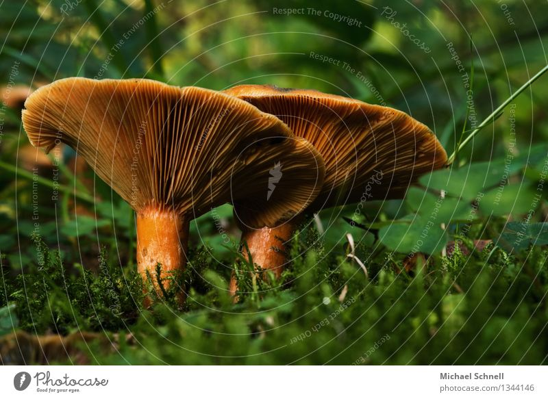 Nature Environment Warmth Friendship Large Mushroom Safety (feeling of) Agreed
