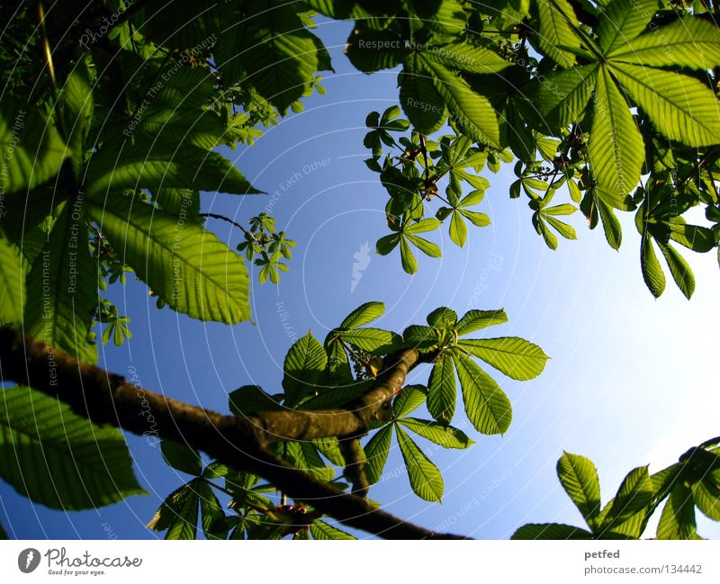 Excessive Spring Leaf Summer Tree Green Leisure and hobbies Vacation & Travel Dream Intensive Beautiful Heavenly Physics Forest Sky Sun Blue Freedom Life Branch