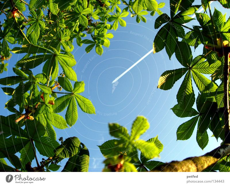 Nature Beautiful Sky Tree Green Blue Summer Vacation & Travel Leaf Forest Life Spring Freedom Dream Warmth Airplane