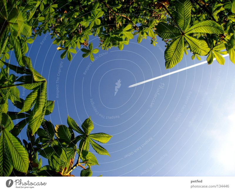 Nature Beautiful Sky Tree Sun Green Blue Summer Vacation & Travel Leaf Forest Life Spring Freedom Dream Warmth