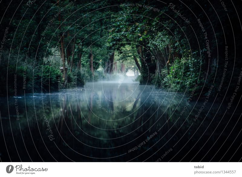 Spreewald Pt2 Nature Horizon Summer Autumn Beautiful weather Fog Tree Grass Bushes Forest River bank Exceptional Loneliness Uniqueness Idyll Far-off places
