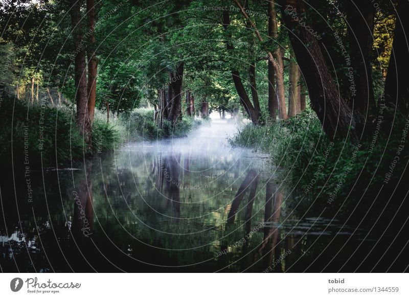 Spreewald Nature Landscape Horizon Summer Autumn Beautiful weather Fog Tree Grass Bushes Forest River bank Exceptional Loneliness Uniqueness Idyll
