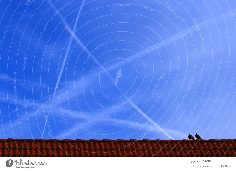 skystormer Vapor trail Stripe Line Airplane Pattern Pigeon Roof Roof ridge Brick Red White Far-off places Longing Wanderlust Vantage point Together Future Past