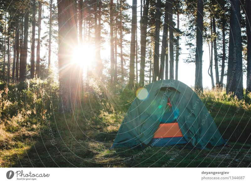 Tent in the forest on sunlight. Nature Vacation & Travel Green Beautiful Summer Sun Tree Relaxation Landscape Forest Grass Park Leisure and hobbies Tourism Hiking Vantage point