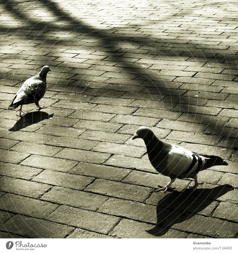 Tree Street Stone Bird Branch Sidewalk Furrow Pigeon Agree Seam Salutation Hello Oncoming traffic