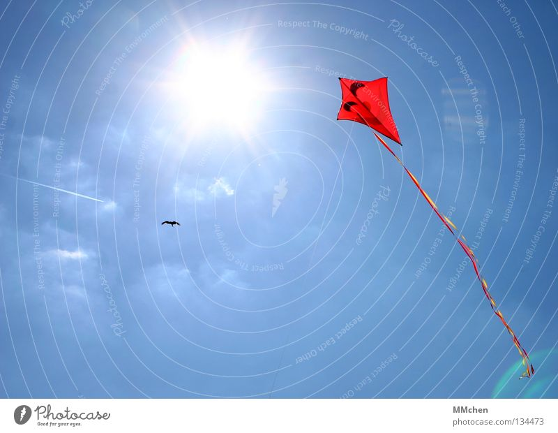 Sky Blue Red Sun Joy Playing Above Air Bright Feasts & Celebrations Bird Wind Leisure and hobbies Flying Tall Airplane