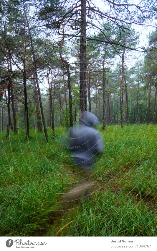 hasty Sports Fitness Sports Training Jogging Human being 1 45 - 60 years Adults Environment Nature Landscape Plant Tree Grass Forest Beautiful Pine needle