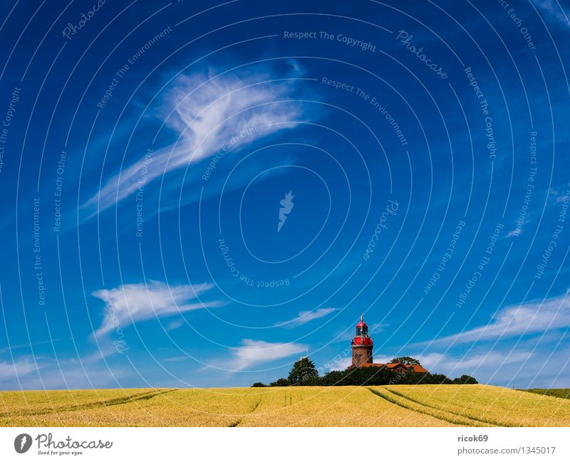 Lighthouse Bastorf Grain Vacation & Travel Summer Agriculture Forestry Nature Landscape Clouds Field Coast Baltic Sea Architecture Tourist Attraction Landmark
