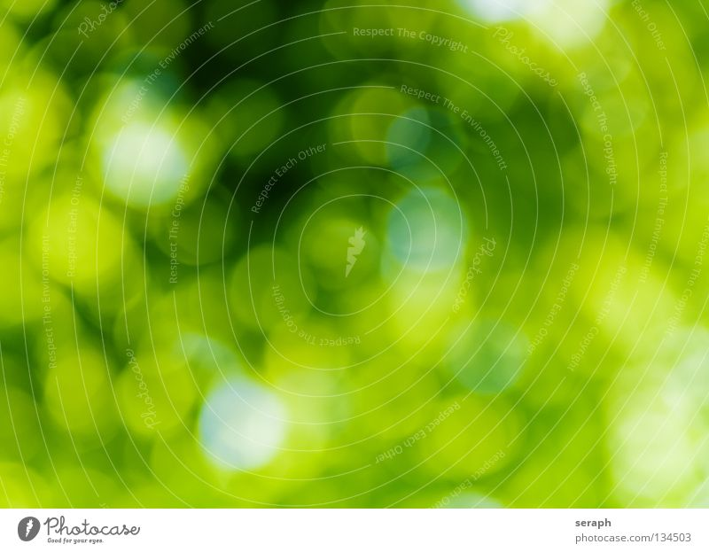 Green Spots Colour Dye Multicoloured Circle Shallow depth of field Blur Patch Speckled Illuminate Lighting Glittering Round Point Point of light Soft
