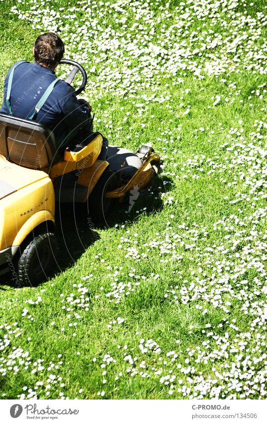 daisy hater Front garden Backyard Meadow Flower meadow Lawnmower Man Daisy Green White Yellow Light Park Craft (trade) Garden caretaker service Mow the lawn