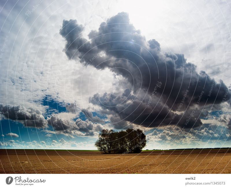 little wood Environment Nature Landscape Plant Sky Clouds Horizon Climate Weather Beautiful weather Tree Clump of trees Field Idyll Far-off places Attachment