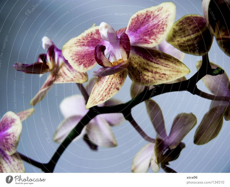 Plant Flower Blossom Delicate Virgin forest Smooth Orchid