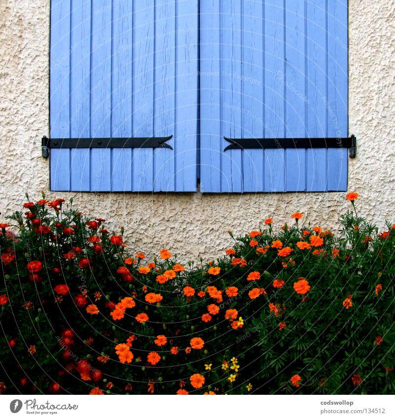 les volets bleus Shutter Provence France Hinge Detail Household there Orange oeillet window flowers shutters carnation blue Dianthus