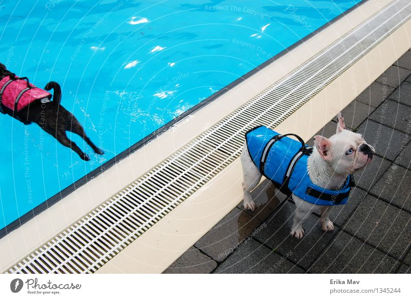 Life jacket testing. Swimming & Bathing Playing Aquatics Swimming pool Animal Pet Dog 2 Relaxation Fitness Sports Wait Athletic Fresh Together Cold Small Wet